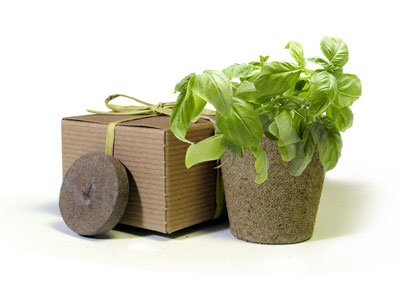 Favor Creative Herb Jr in a Box Kit, Basil - Eco Friendly Party Favors