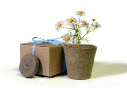Favor Creative Herb Jr in a Box Kit, Chamomile - Eco Friendly Party Favors