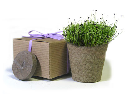 Favor Creative Herb Jr in a Box Kit, Chives - Eco Friendly Party Favors