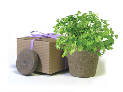 Favor Creative Herb Jr in a Box Kit, Cilantro - Eco Friendly Party Favors