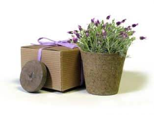 Favor Creative Herb Jr in a Box Kit, Lavender - Eco Friendly Party Favors