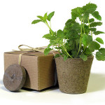 Herb Junior - Eco-Friendly Party Favor