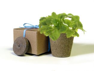 Favor Creative Herb Jr in a Box Kit, Mint - Eco Friendly Party Favors