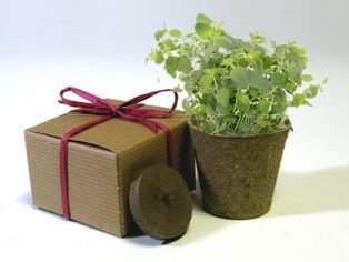 Favor Creative Herb Jr in a Box Kit, Oregano - Eco Friendly Party Favors