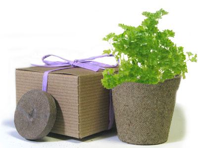 Favor Creative Herb Jr in a Box Kit, Parsley - Eco Friendly Party Favors