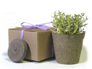 Favor Creative Herb Jr in a Box Kit, Rosemary - Eco Friendly Party Favors