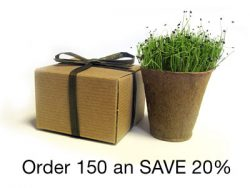 BULK Save 20% - Favor Creative Herb Junior Chives - Eco-Friendly Party Favor