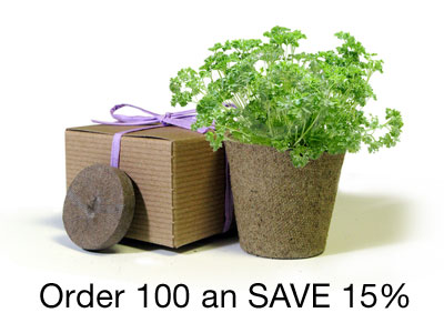 BULK Save 15% - Favor Creative Herb Junior Viola - Eco-Friendly Party Favor