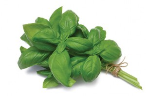 growing-basil-2