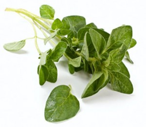 growing-oregano-2