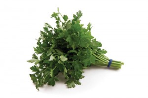 growing-parsley-2