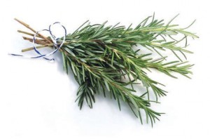 growing-rosemary-2