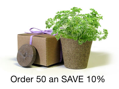 BULK Save 10% - Favor Creative Herb Junior Viola - Eco-Friendly Party Favor