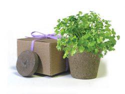 Favor Creative Herb Jr in a Box Kit, Cilantro - Eco Friendly Party Favors