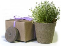 Favor Creative Herb Jr in a Box Kit, Thyme - Eco Friendly Party Favors