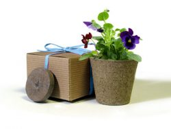 Favor Creative Herb Jr in a Box Kit, Viola - Eco Friendly Party Favors